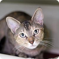 Adopt A Pet :: Tina Louise - Chicago, IL