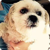 Adopt A Pet :: Vena - Hazard, KY