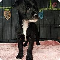 Adopt A Pet :: Toby - Cerritos, CA