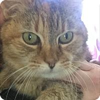 Adopt A Pet :: Tang - Baltimore, MD