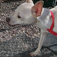 Adopt A Pet :: Zorro - Benton, PA