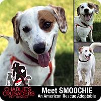 Adopt A Pet :: Smoochie - Pottstown, PA