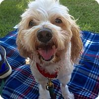 Adopt A Pet :: Santana - Mission Viejo, CA
