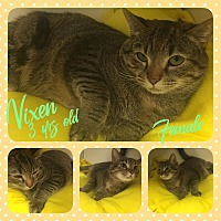 Adopt A Pet :: Vixen - Siler City, NC