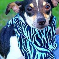 Adopt A Pet :: Cocoa - Batesville, AR