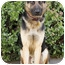Photo 3 - German Shepherd Dog Mix Puppy for adoption in Los Angeles, California - Chevy von Chase