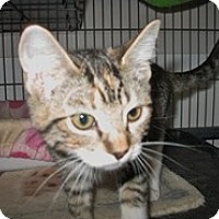 Adopt A Pet :: Jolie - Shelton, WA