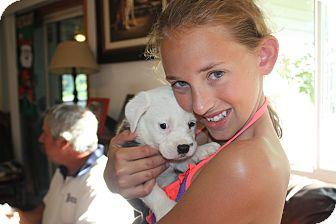 Labrador Retriever Mix Puppy for adoption in Homer, New York - Bridget