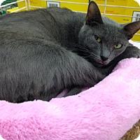Adopt A Pet :: Penny - Dallas, TX