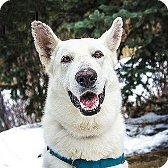 German Shepherd Dog Dog for adoption in Denver, Colorado - Titan