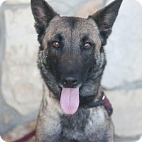 Adopt A Pet :: Nala - Canoga Park, CA