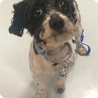 Adopt A Pet :: Jack - Oak Ridge, NJ