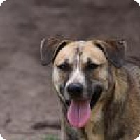 German Shepherd Dog Mix Dog for adoption in Springtown, Texas - Titus