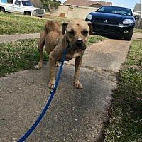 Adopt A Pet :: Kaya - Benton, LA