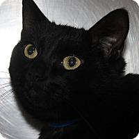 Adopt A Pet :: CLAWS - Clayton, NJ