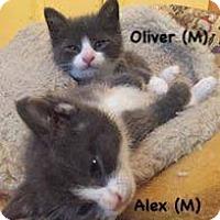 Adopt A Pet :: Oliver - West Orange, NJ