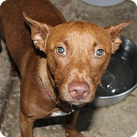 Adopt A Pet :: Tiny Tucker - Daleville, AL