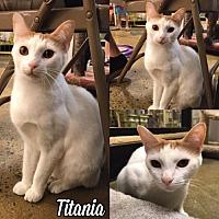 Adopt A Pet :: Titania171223 - Atlanta, GA