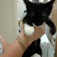 Adopt A Pet :: Tesla - Myrtle Beach, SC