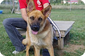 Shepherd (Unknown Type) Mix Dog for adoption in Elyria, Ohio - Candy