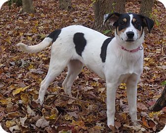Hound (Unknown Type) Mix Dog for adoption in Cambridge, Maryland - MeeMee