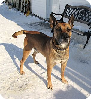 Shepherd (Unknown Type) Mix Dog for adoption in Ile-Perrot, Quebec - Hobo