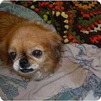 Adopt A Pet :: Paige - Newport, VT