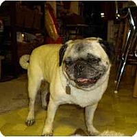 Adopt A Pet :: Dolly - Eagle, ID