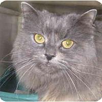 Adopt A Pet :: Heddy - Mesa, AZ