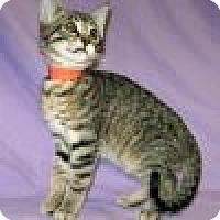 Adopt A Pet :: Kyler - Powell, OH