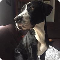 Adopt A Pet :: Delaney - Hamilton, ON