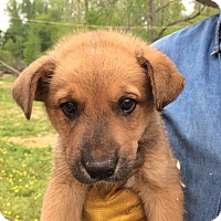 Adopt A Pet :: Stuart - Hohenwald, TN