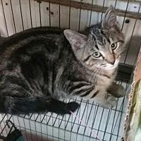 Adopt A Pet :: Ivy Rose - Bay City, MI