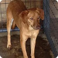 Adopt A Pet :: Easter pending adoption - East Hartford, CT