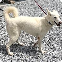 Adopt A Pet :: Tilly - Towson, MD