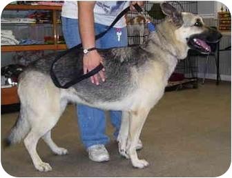 German Shepherd Dog Mix Dog for adoption in Somerset, Pennsylvania - Vegas