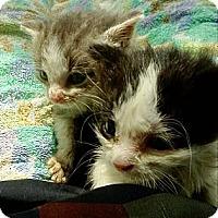 Adopt A Pet :: Woody & Buzz Lightyear - Columbus, OH