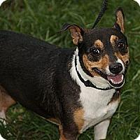 Adopt A Pet :: Daisy Doo - Staunton, VA