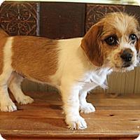 Adopt A Pet :: Honey Bun - Wytheville, VA