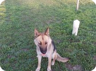 German Shepherd Dog Mix Dog for adoption in Dripping Springs, Texas - Piper