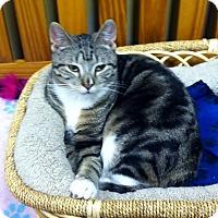 Adopt A Pet :: Bambino - Byron Center, MI