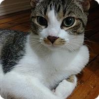 Adopt A Pet :: Frank - Aylmer, ON