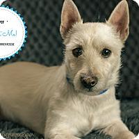 Adopt A Pet :: Oliver-pending adoption - Omaha, NE