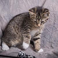 Adopt A Pet :: STANTON - Anna, IL