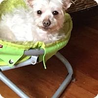 Adopt A Pet :: Mario - N. Babylon, NY