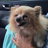 Adopt A Pet :: Betty - Venice, FL