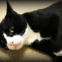 Adopt A Pet :: Simon - Ocean Springs, MS