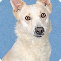 Adopt A Pet :: Aida - Encinitas, CA