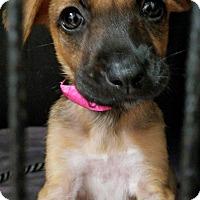 Adopt A Pet :: Cruella Deville - Plainfield, IL