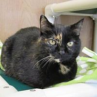 Adopt A Pet :: Watusi - Fargo, ND